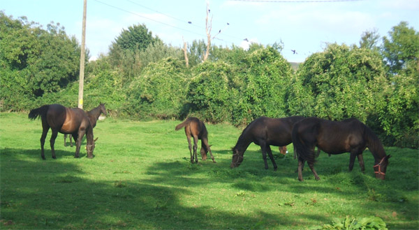 See our resident horses